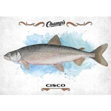 Fish Cisco - 2015-16 Champs No.F-11